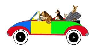 Perros y gatos que conducen en un coche Foto de archivo libre de regalías