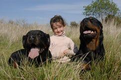 Perros y niño peligrosos imagenes de archivo