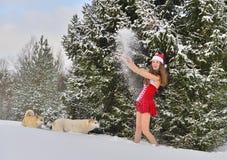 Perros y Papá Noel-muchacha joven atractiva adentro en bosque de la Navidad Imágenes de archivo libres de regalías