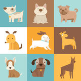 Perros y perritos divertidos y amistosos Imagen de archivo