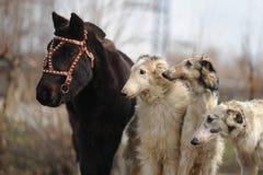 Perros y potros de los caballos Imagen de archivo libre de regalías