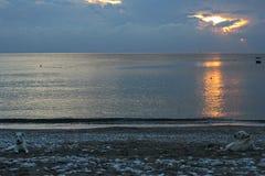 Perros y puesta del sol Fotografía de archivo libre de regalías