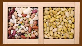 Perruano and mix bean Stock Photos
