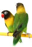 Perruche verte de perroquet Photo libre de droits