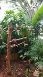 Perruches sur le tronçon d'arbre Photo libre de droits