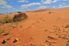 Perry sandhills, Wentworth, New South Wales, Australien Royaltyfri Foto