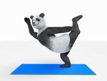 Persönlichkeitscharaktertierbärn-Pandayoga, das Übungen verschiedene Lagen und asanas ausdehnt Stockfotos