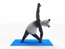 Persönlichkeitscharaktertierbärn-Pandayoga, das Übungen verschiedene Lagen und asanas ausdehnt Stockbild