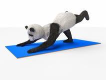 Persönlichkeitscharaktertierbärn-Pandayoga, das verschiedene Lagen der Übungen ausdehnt Stockbilder