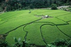 Persawahan Indonesia fotos de archivo