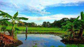 Persawahan Landcape Royaltyfri Fotografi