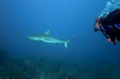 Persecución del tiburón imagenes de archivo