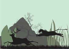 Perseguição de Pantera os cervos Foto de Stock