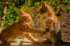 Perseguição pequena bonito de dois gatinhos Foto de Stock