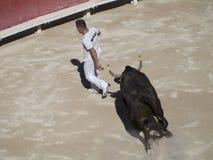 Perseguido pelo touro fotos de stock royalty free
