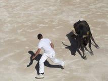 Perseguido pelo touro fotografia de stock royalty free