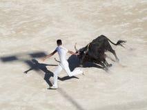 Perseguido pelo touro imagens de stock royalty free