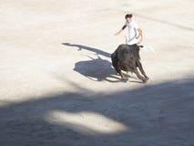 Perseguido pelo touro imagem de stock royalty free