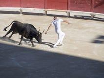 Perseguido pelo touro fotografia de stock