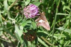 Perseguindo uma borboleta Fotos de Stock Royalty Free