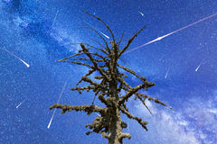 Perseid Meteor Shower in 2016. Falling stars.Dead mossy tree Stock Image