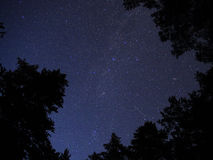 Night sky stars Perseids meteors forest trees Royalty Free Stock Photo