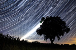Perseids star trails Royalty Free Stock Photos