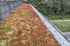 Persepctive-Ansicht einer Brücke mit einem Blumenbeet lizenzfreie stockfotografie