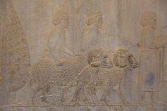 Persepolis, Ιράν Στοκ Φωτογραφία