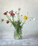 Persian Buttercup Flowers Stock Image