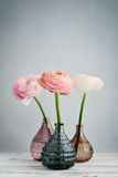 Persian buttercup flowers Royalty Free Stock Photos