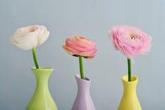 Persian buttercup flowers Stock Photos