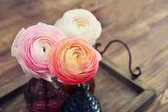 Persian buttercup flowers Royalty Free Stock Images