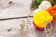 Persian buttercup Royalty Free Stock Photo