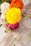 Persian buttercup Stock Photos