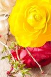 Persian buttercup Stock Image