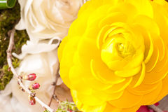 Persian buttercup Stock Photography