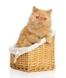 Persian cat in basket Stock Images