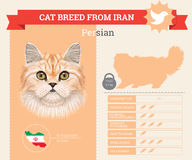 Persian Cat breed  infographics Royalty Free Stock Photos