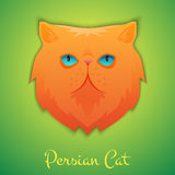 Persian cat Stock Photos