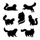 Persian cat icons and silhouettes. Royalty Free Stock Photos