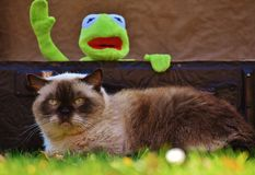 Persian Cat Illustration Stock Image