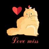 Persian cat in love Royalty Free Stock Photo