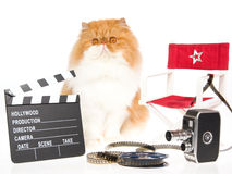 Persian cat with movie props on white background Royalty Free Stock Image