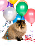 Persian cat with party balloons Stock Images