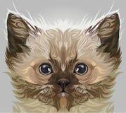 Persian cat vector. Cute persian cat in vector illustration vector illustration