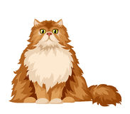 Persian cat. Vector illustration. Stock Images