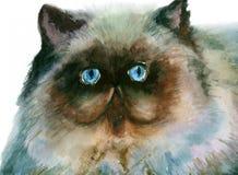 Persian cat Royalty Free Stock Photography