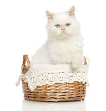 Persian cat in wicker basket Royalty Free Stock Photography