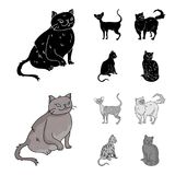 Persian, Cornish rex and other species. Cat breeds set collection icons in black,monochrome style vector symbol stock. Illustration Royalty Free Stock Photography